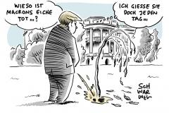 Sinnbild für Krise zwischen USA und Europa: Von Trump und Macron gepflanzte Eiche tot