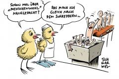 Stellungnahme des Ethikrats: Mehr Tierwohl, höhere Fleischpreise