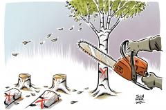 Umweltschutz Natur Baum Baumsterben